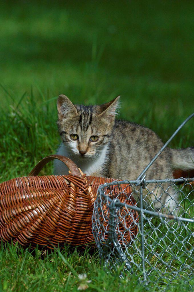 Stock Photo: 4413-229141 Female kitten playing in a garden