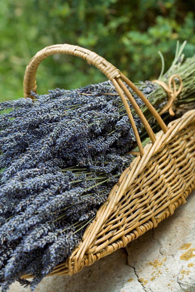 Stock Photo: 4413-230496 Harvest of lavandine on a garden terrace