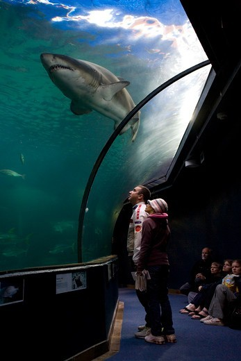 Stock Photo: 4413-26806 Visitors and Bull Shark Cape Aquarium South Africa