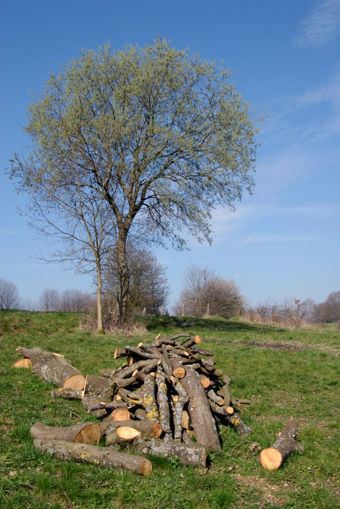 Stock Photo: 4413-31144 Wood firing stored in a orchard Allenjoie France