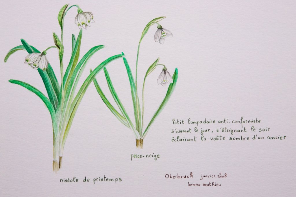 Watercolor of a Snowdrops and a Spring Snowflake : Stock Photo