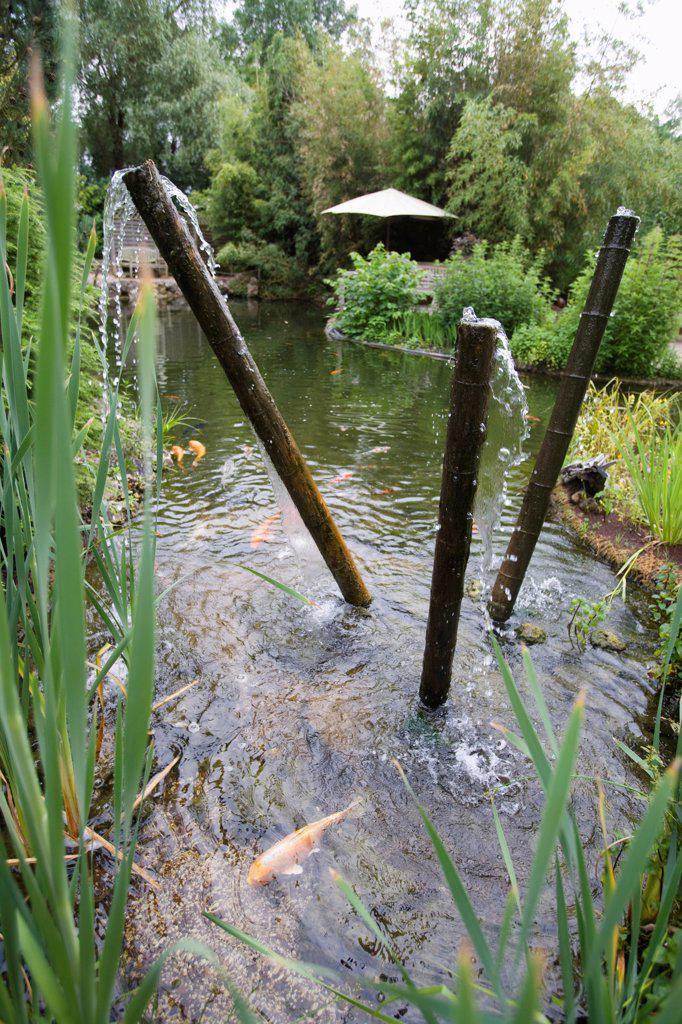 Garden pound and fountain with koi carps : Stock Photo
