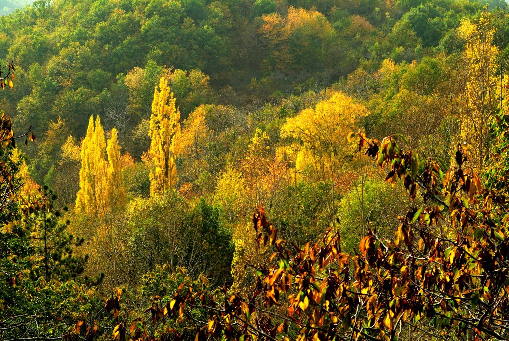 Stock Photo: 4413-42081 Fall colors in Monts d'Ardèche National Park France