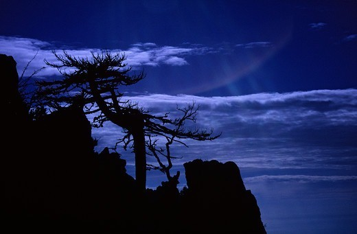 Stock Photo: 4413-4309 Silhouette of a Pine struck down on a peak Corse France