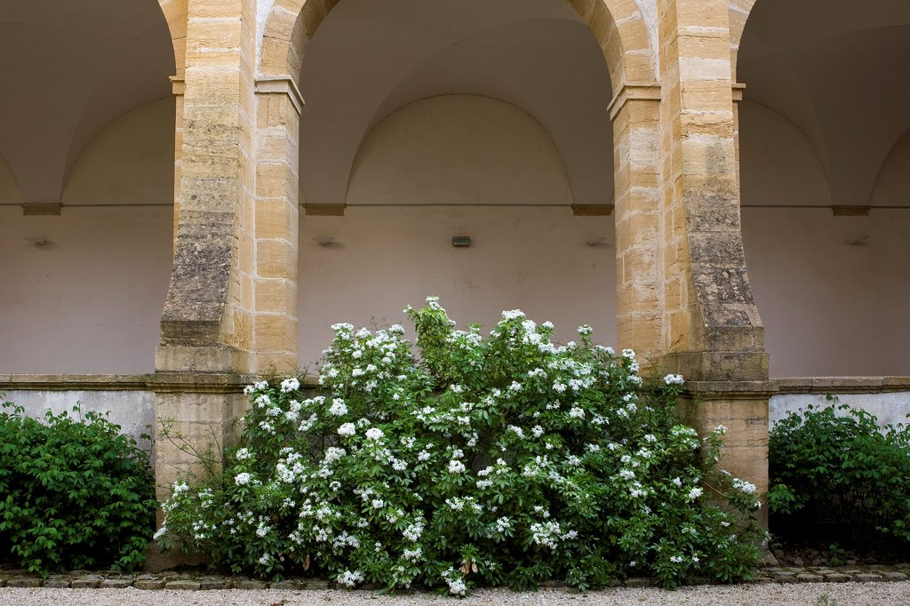Stock Photo: 4413-43186 Bush with white flowers at a monastery Bourgogne France