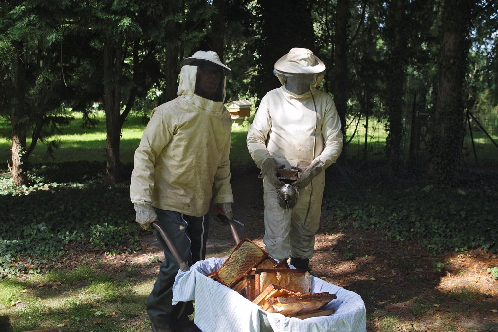 Stock Photo: 4413-63975 Taking honey in hives in an orchard of Somme