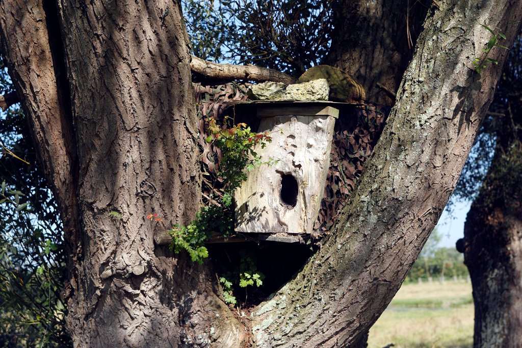 Nestbox for owl Marquenterre Baie de Somme France : Stock Photo