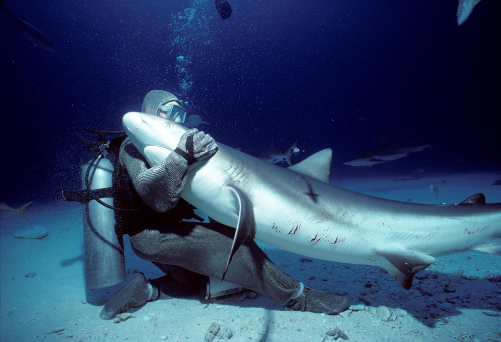 Shark handler embracing Shark in hyptonic trance Bahamas : Stock Photo
