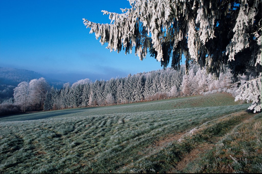 Stock Photo: 4413-7309 Frost in the Vosgean countryside France
