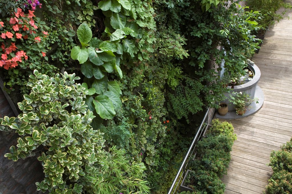 Stock Photo: 4413-74004 Vertical city garden