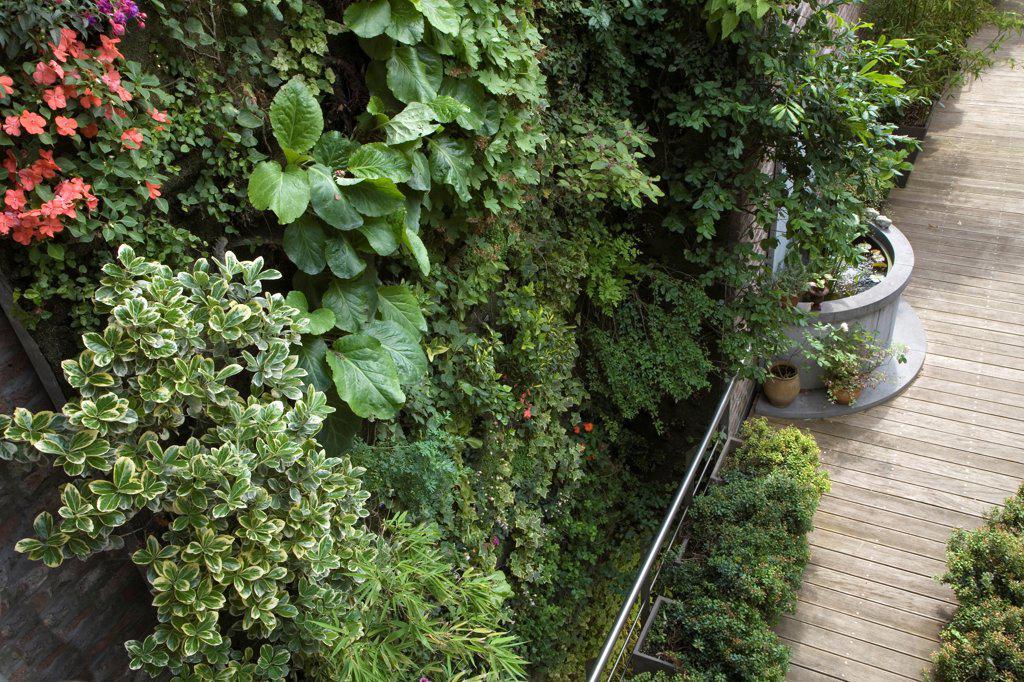 Vertical city garden : Stock Photo