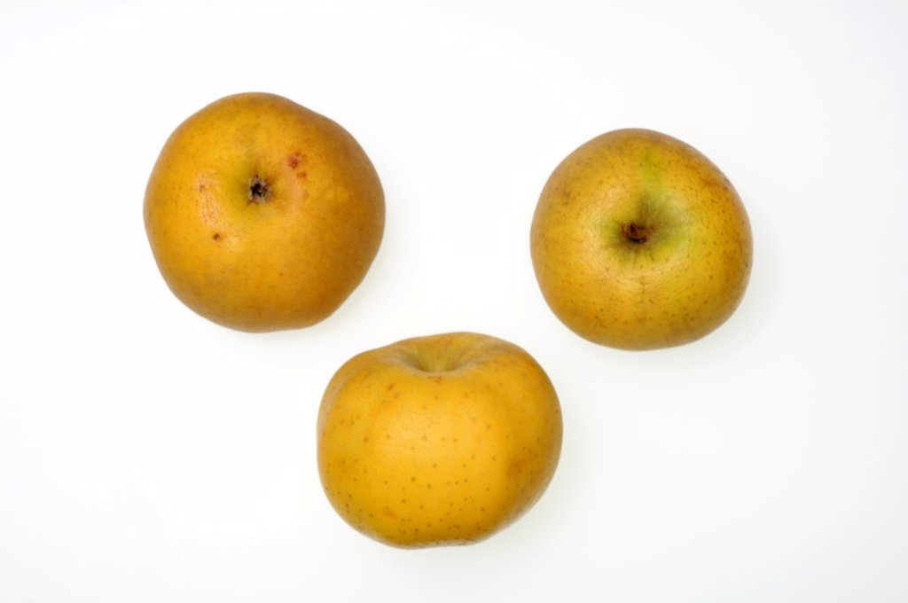 Apples Chanteclerc created in 1958 by INRA Angers : Stock Photo