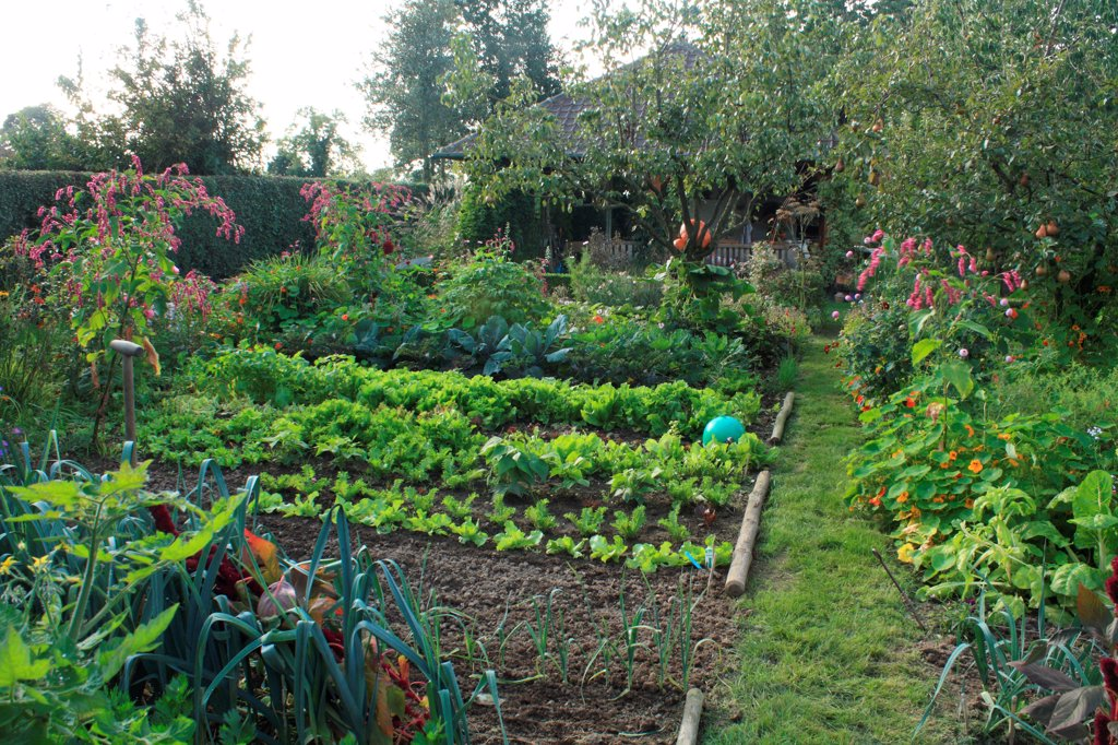 Stock Photo: 4413-84977 Vegetable garden in The Garden of Marie-Ange in Croisette