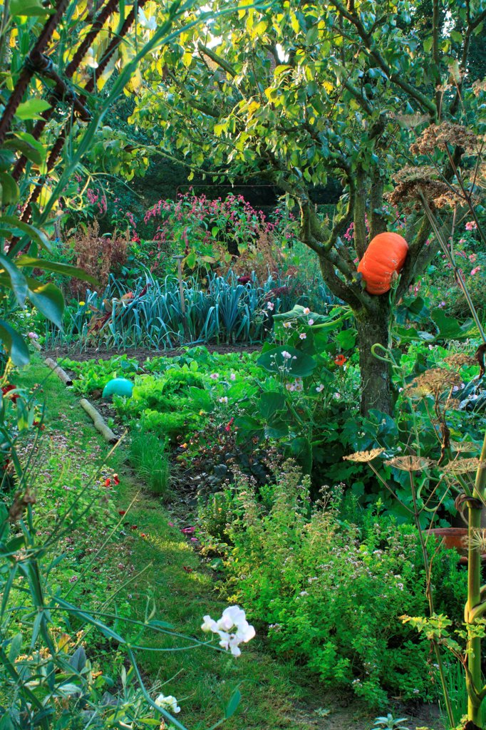 Vegetable garden in The Garden of Marie-Ange in Croisette : Stock Photo