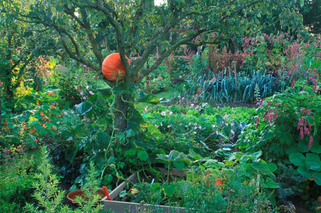 Vegetable garden in The Garden of Marie-Ange in Croisette : Stock Photo