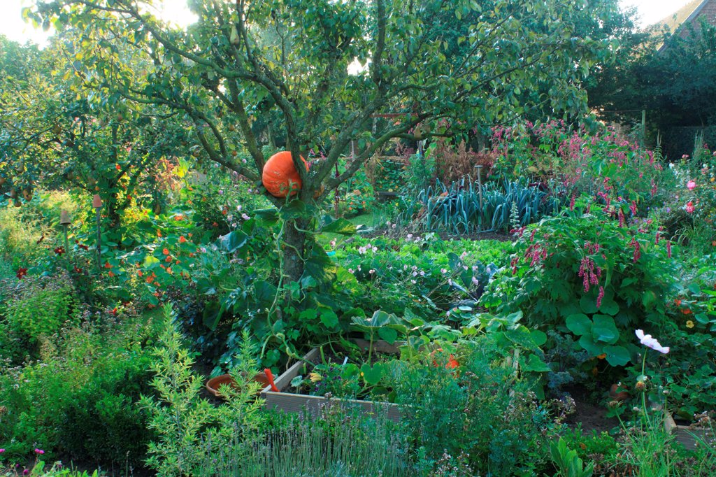 Stock Photo: 4413-84993 Vegetable garden in The Garden of Marie-Ange in Croisette