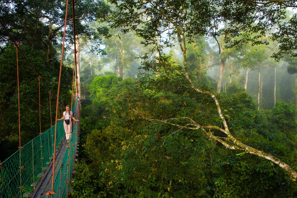 Canopy walkway Danum Valley Borneo Malaysia : Stock Photo