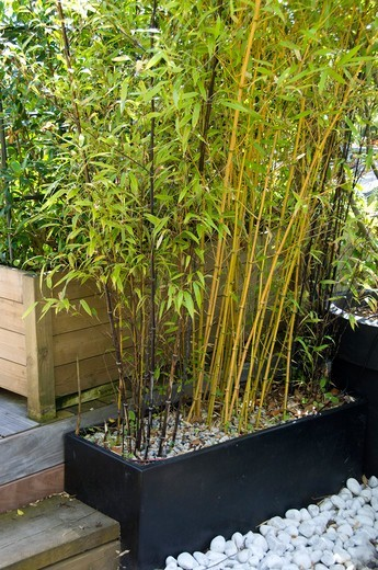 Stock Photo: 4413-95652 Bamboo in container on a garden terrace