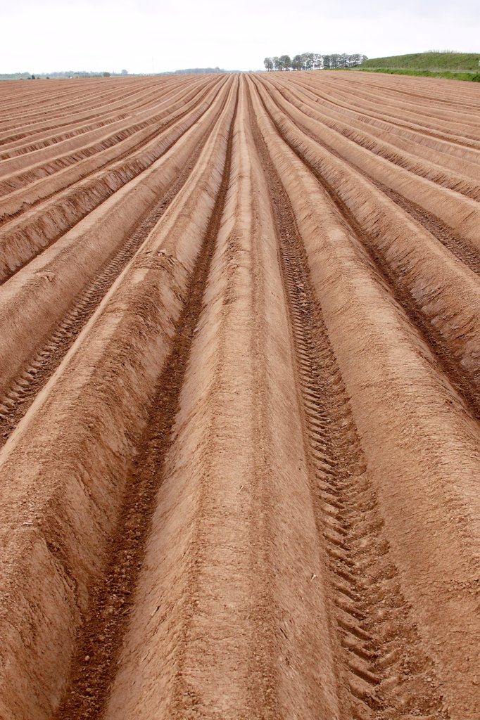 Grooves ready to be planted in Seine-Maritime : Stock Photo