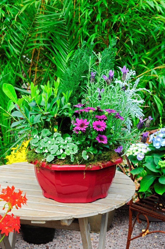 Flowered pot on a garden terrace : Stock Photo