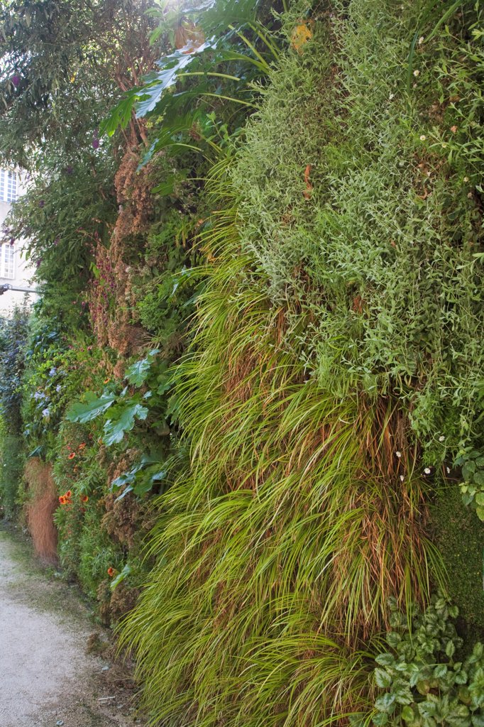 Vertical garden with hakone grass and acanthus : Stock Photo