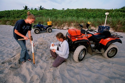 Stock Photo: 4414-1509 USA, Florida, Marine scientists study Leatherback Turtle (Dermochelys coriacea) by counting nests and eggs monitoring health of this endangered species