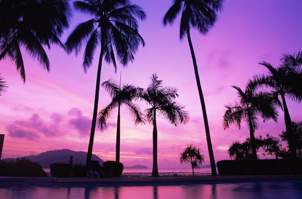 Silhouette of palm trees at dusk, Phuket, Thailand : Stock Photo
