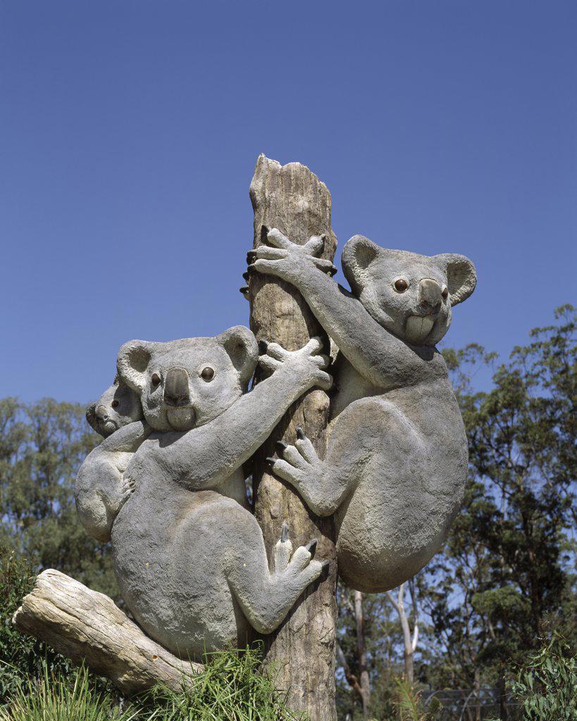 Close-up of a Koala Statue, Casino Zoo, Casino, Australia : Stock Photo