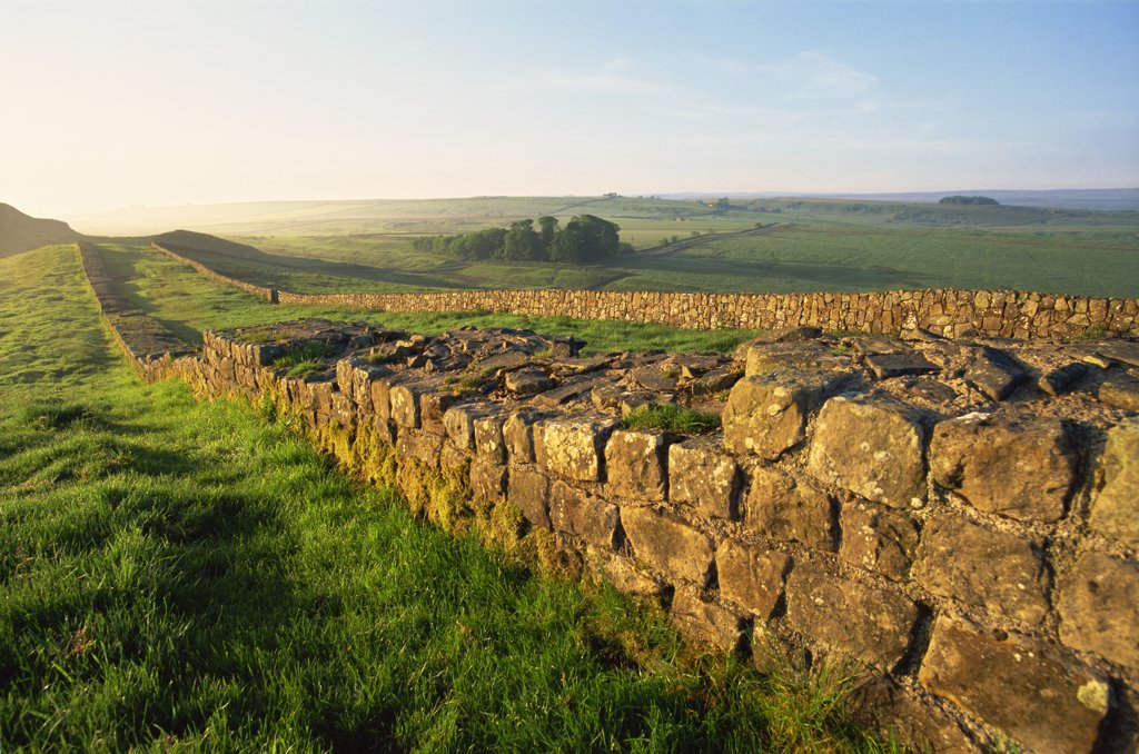 Stock Photo: 442-10482 Ruins of a stone wall in a field, Hadrian's Wall, Northumbria, England