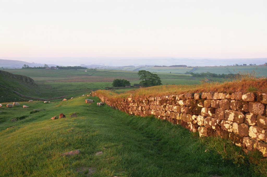 Stock Photo: 442-10483 Ruins of a stone wall in a field, Hadrian's Wall, Northumbria, England