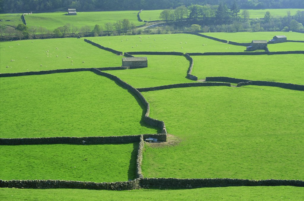 High angle view of fields, Swaledale, Yorkshire Dales, Yorkshire, England : Stock Photo