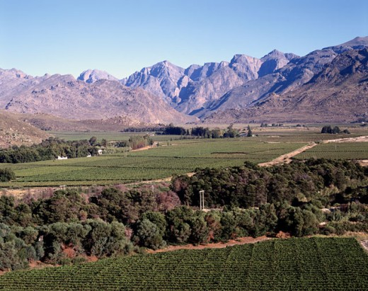 Vineyard on the hillside, Hex River Valley, Cape Province, South Africa : Stock Photo