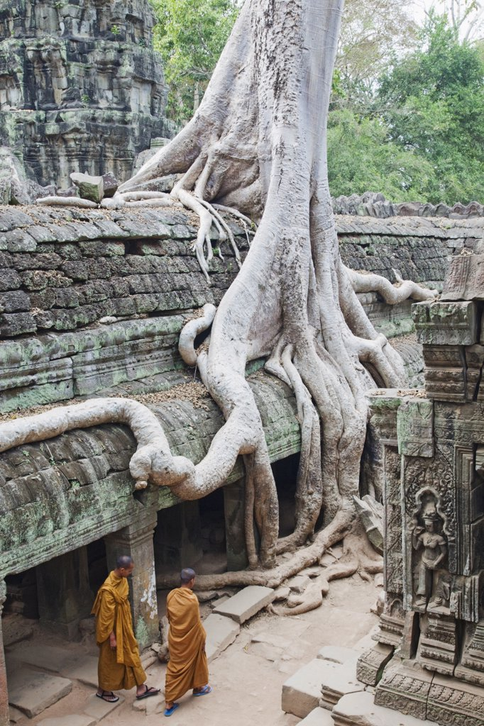 Monks at a temple, Ta Prohm Temple, Angkor Wat, Angkor, Siem Reap, Cambodia : Stock Photo