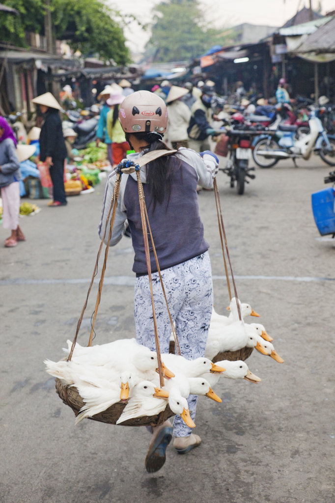 Stock Photo: 442-35528 Woman carrying ducks to market, Hoi An, Vietnam