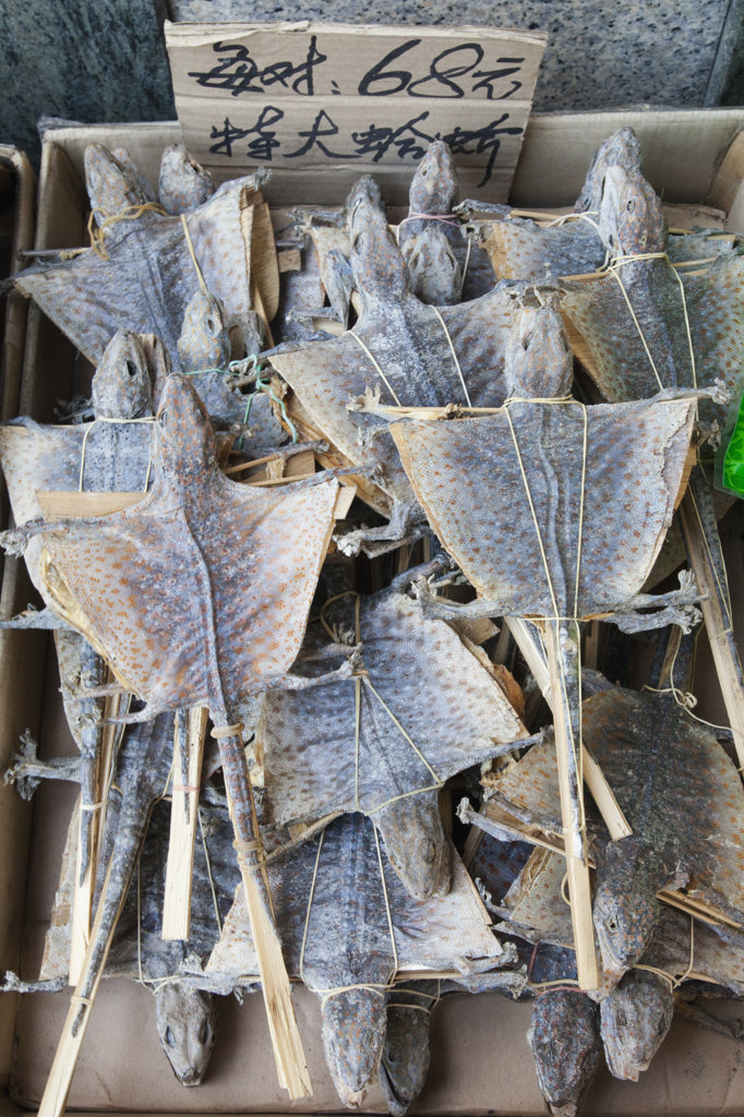 Stock Photo: 442-36764 Dried Lizards for sale at market, Sheung Wan, Hong Kong, China