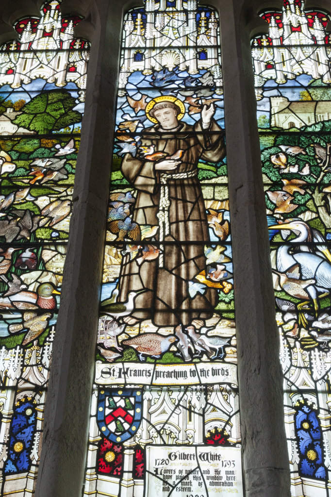 Stock Photo: 442-37674 UK, England, Hampshire, Selborne, St.Mary The Virgin Church, Stained Glass Window dedicated to Gilbert White depicting St.Francis Preaching to the Birds