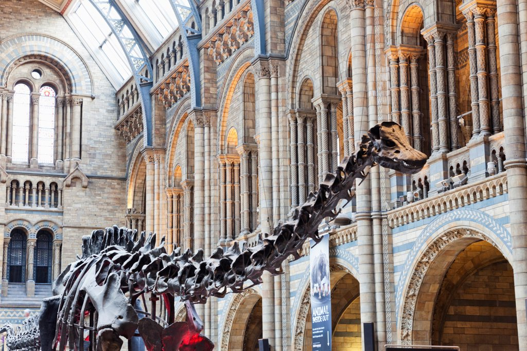 UK, London, Kensington, Natural History Museum, Dinosaur exhibit : Stock Photo