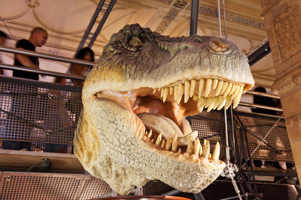 UK, London, Kensington, Natural History Museum, T-Rex Dinosaur exhibit : Stock Photo
