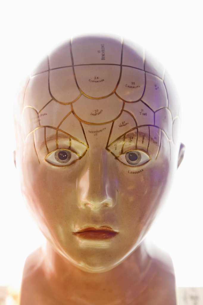 Stock Photo: 442-38298 Phrenology Head