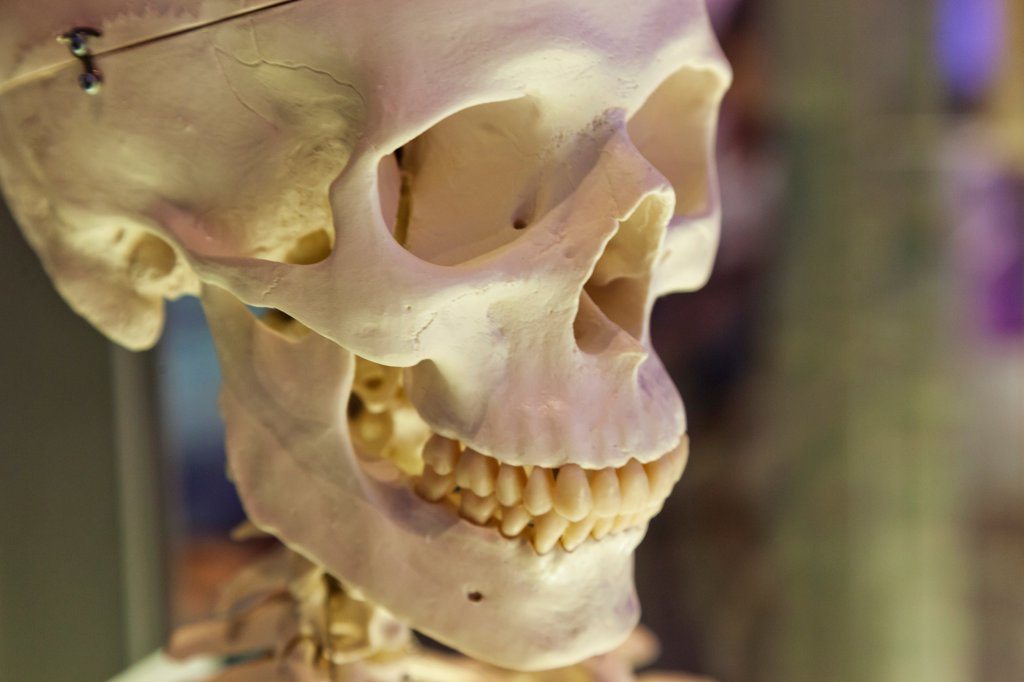 UK, London, Kensington, Science Museum, Medical History Section, Human Skull : Stock Photo
