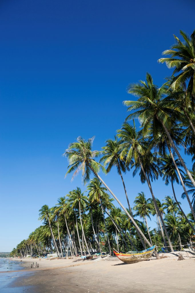 Stock Photo: 442-39059 Vietnam, Mui Ne, Mui Ne Beach, Palm Trees