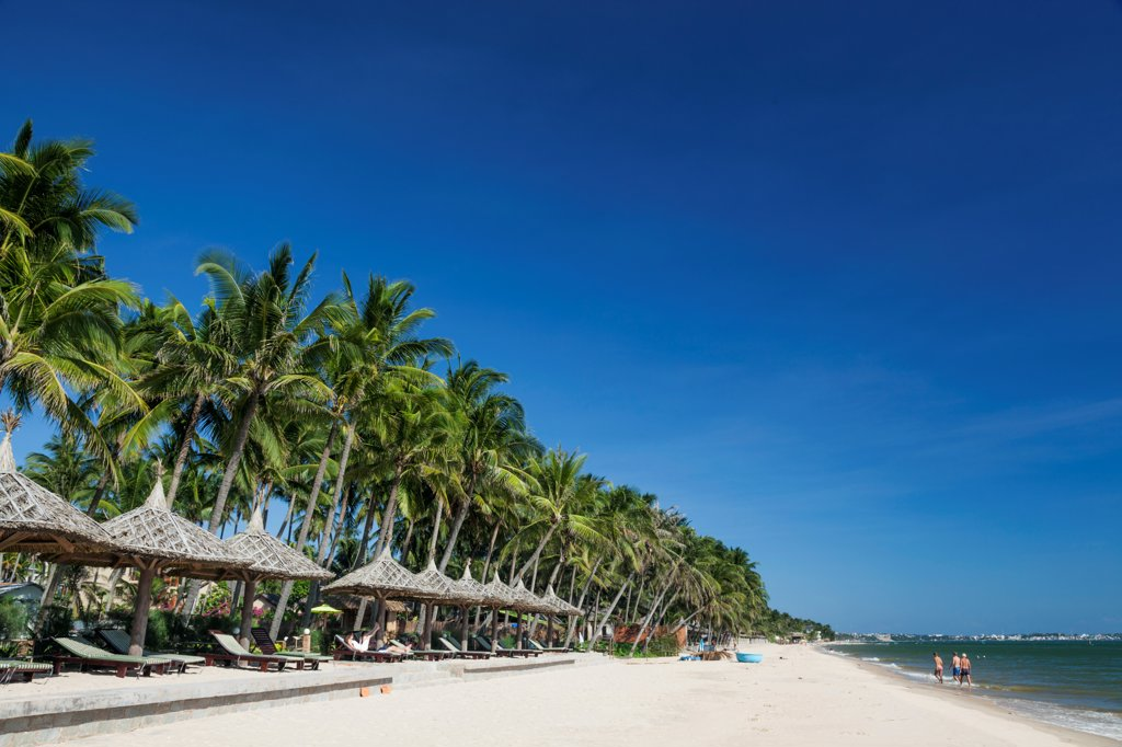 Stock Photo: 442-39060 Vietnam, Mui Ne, Mui Ne Beach, Palm Trees