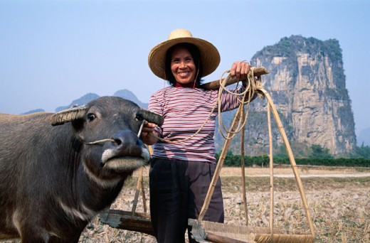 Stock Photo: 442-6015 Portrait of a female farmer with a water buffalo, Guilin, Yangshou, China