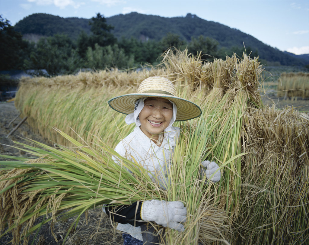Portrait of a mid adult woman harvesting rice, Yamanashi, Honshu, Japan : Stock Photo