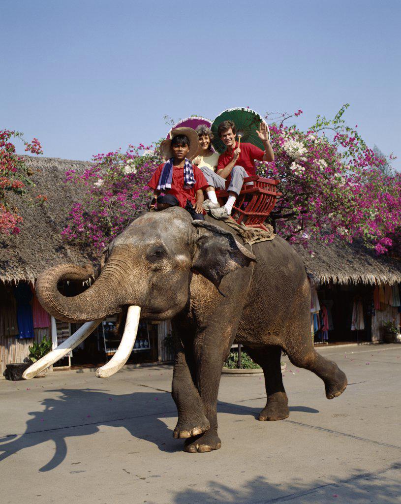 Stock Photo: 442-7134 Portrait of a couple riding an elephant, Rose Garden, Bangkok, Thailand