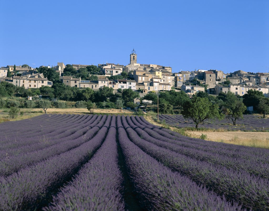 Lavender Fields and Village, Puimosson, Provence, France : Stock Photo
