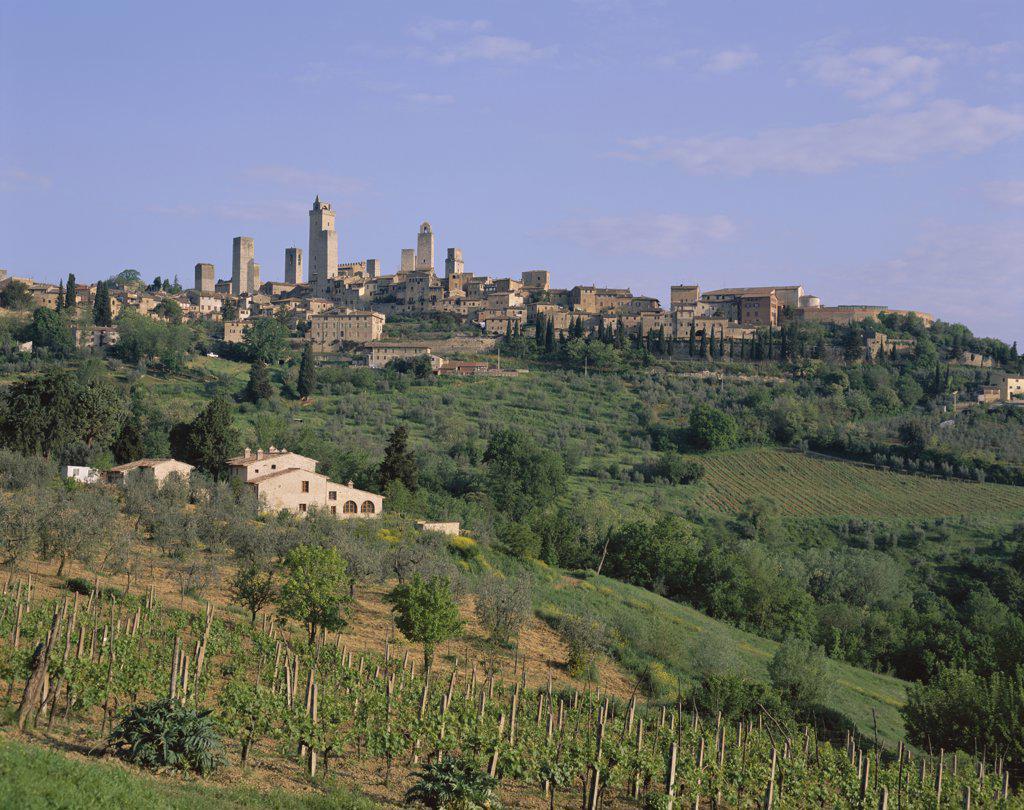 Vineyards and Medieval Town Skyline, San Gimignano, Tuscany, Italy : Stock Photo