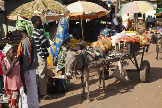 Stock Photo: 4421-18309 Donkey, adult, pulling cart in market, Gambia, january