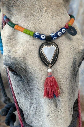 Stock Photo: 4421-18316 Donkey, adult, close-up of head, with decorative beaded headwear, Fira, Santorini, Cyclades, Aegean Sea, Greece, September