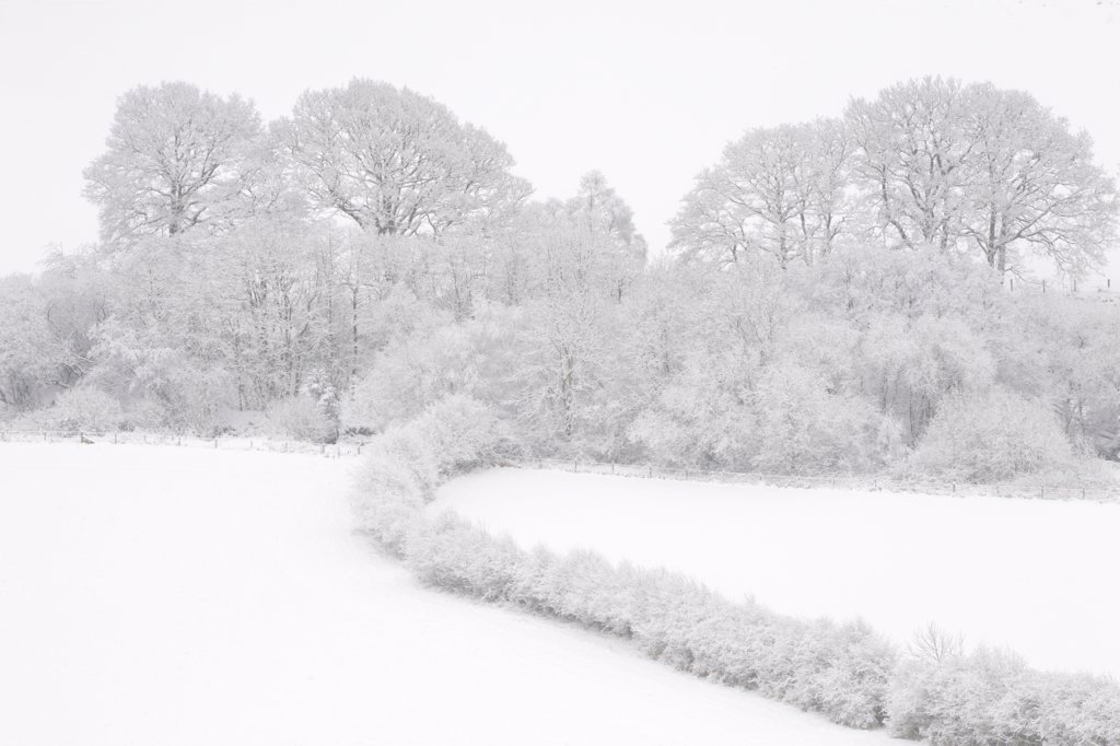Trees, hedges and fields after heavy snow, near Llanidloes, Powys, Wales, winter : Stock Photo